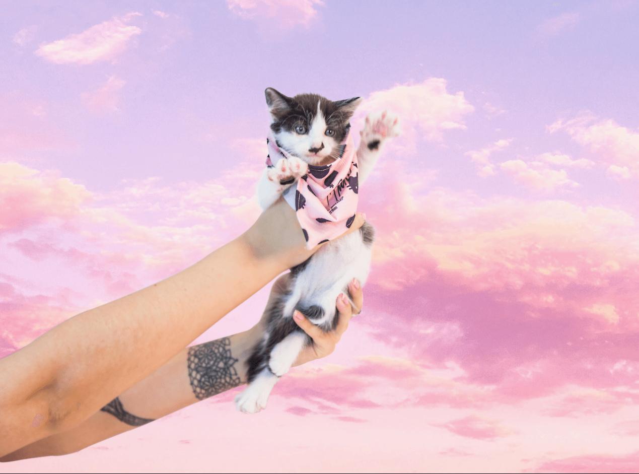 Guia: Como agradar seu gatíneo em 10 passos!